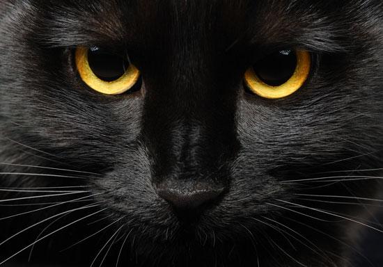 Por qué los gatos negros traen mala suerte? | A la Vuelta de la ...