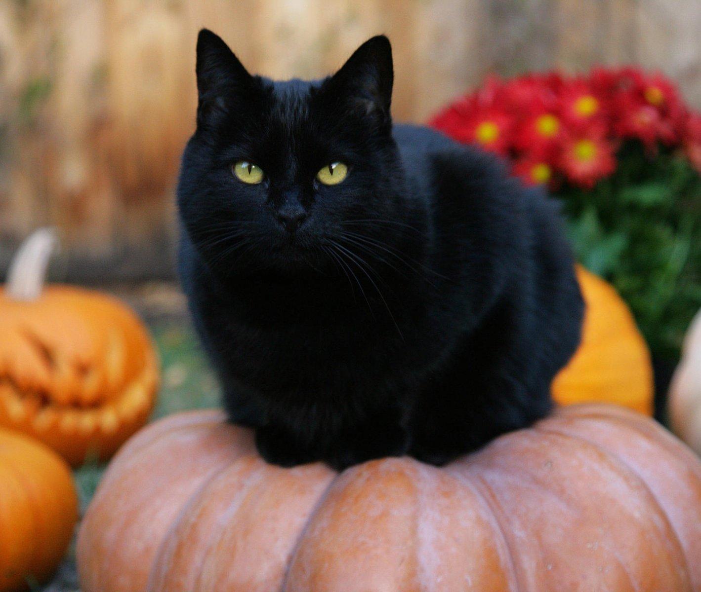 Por qu los gatos negros traen mala suerte a la vuelta - Acabar con la mala suerte ...