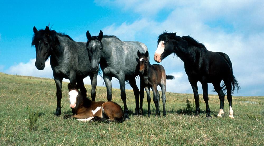 Curiosidades sobre caballos