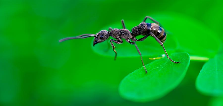 Datos curiosos sobre las hormigas