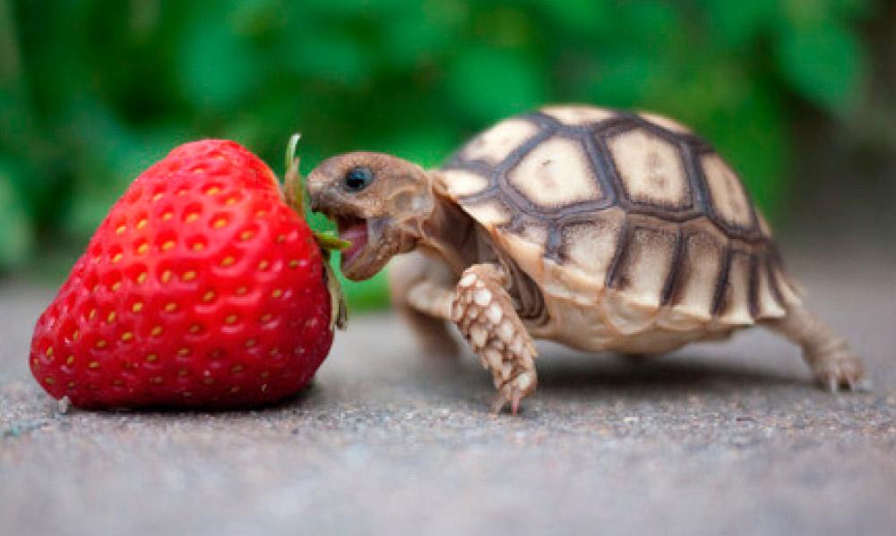 Datos curiosos sobre tortugas