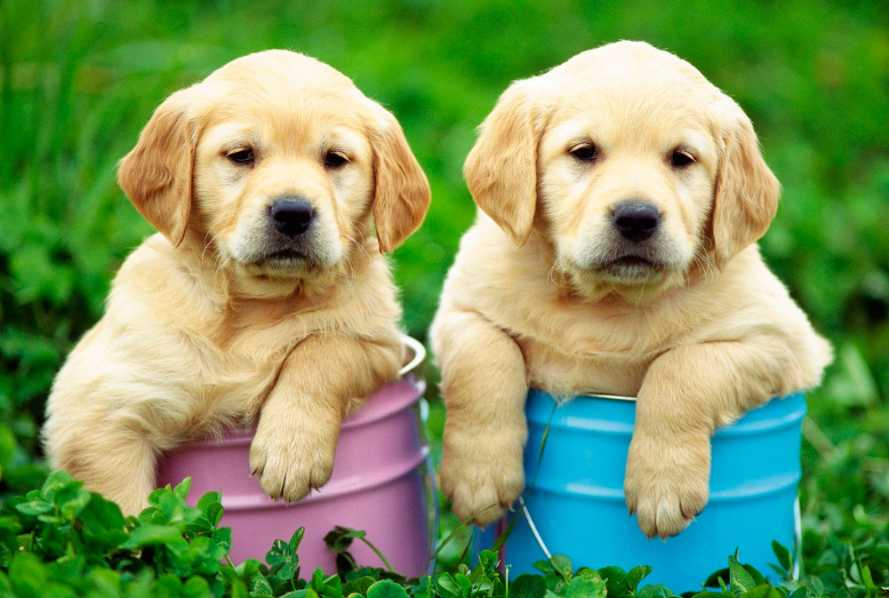 Datos interesantes sobre perros