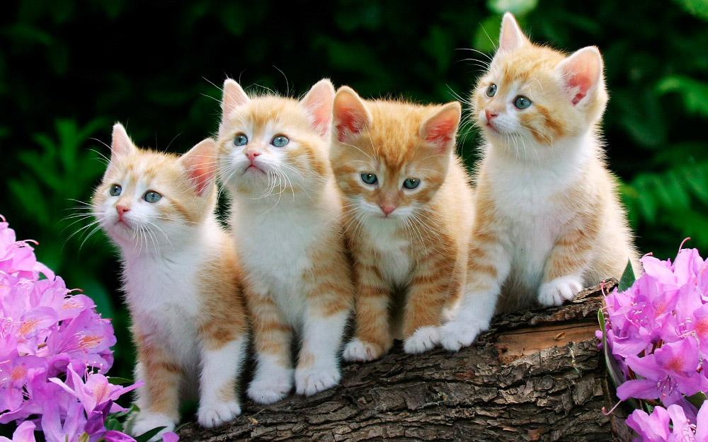 Información curiosa sobre gatos