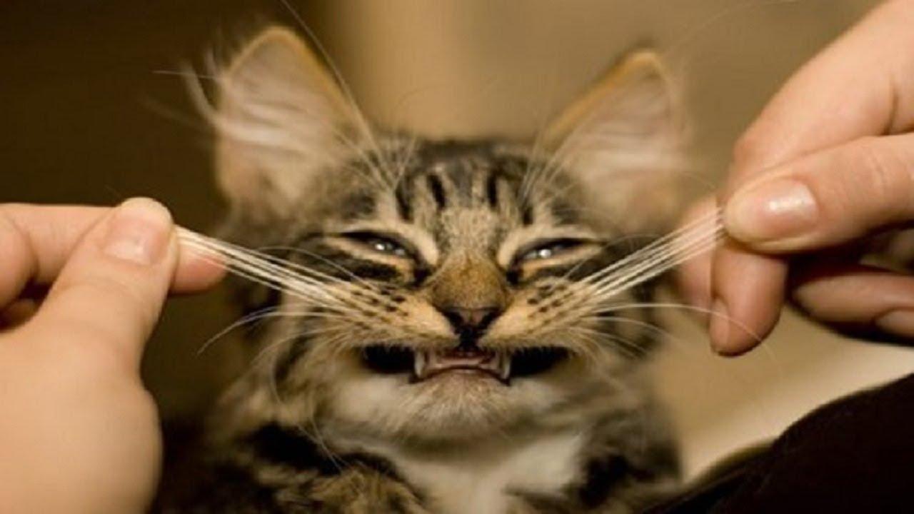 Los vídeos de gatitos reducen el estrés