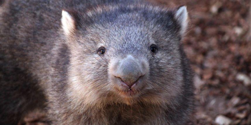 Ver selfies de animales ayuda a protegerlos