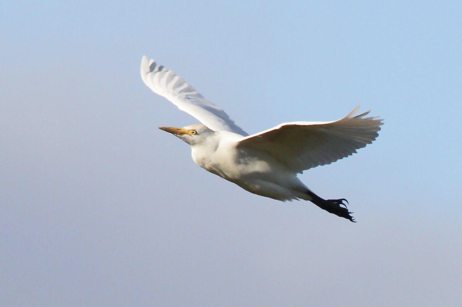 Los mejores lugares de España para ver aves