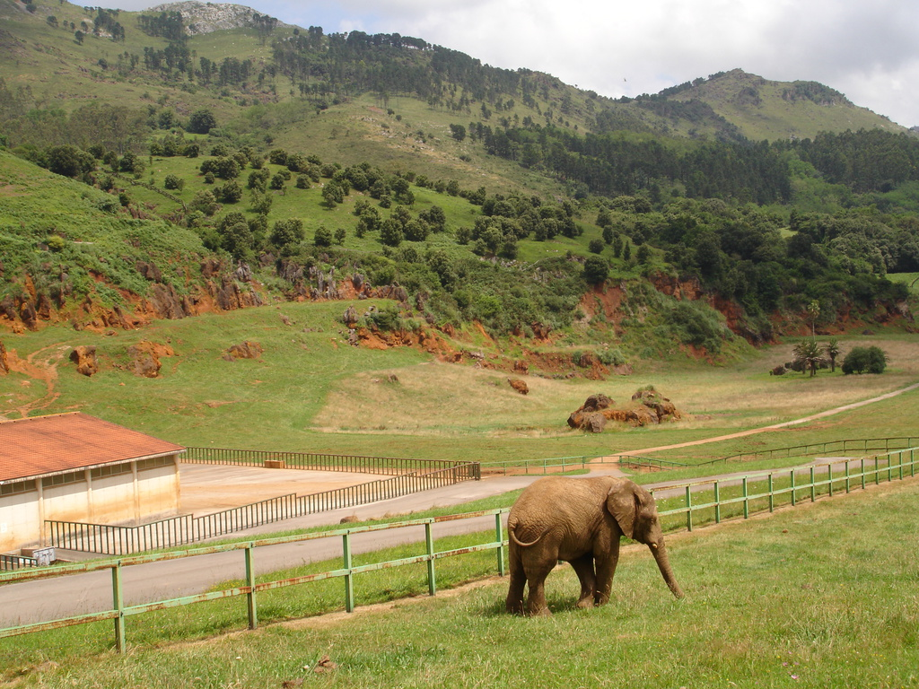 Visitar el Parque de Cabarceno