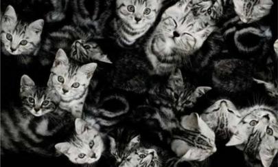 ¡O yo o tus 550 gatos!