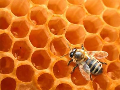 ¿Es cierto que la miel no se estropea?