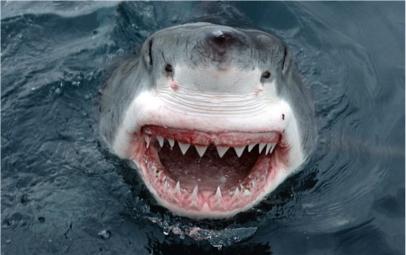 El pescador y el tiburón