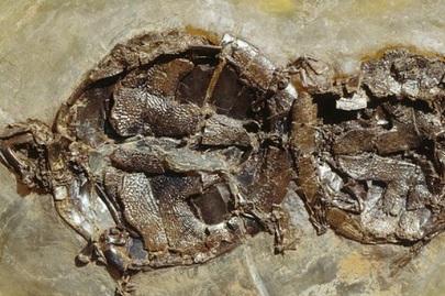 47 millones de años copulando