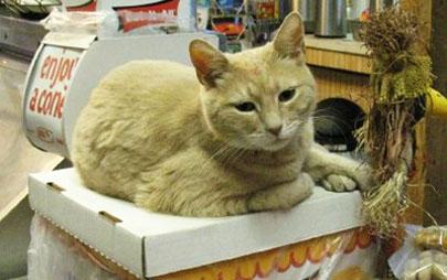 Un gato lleva 15 años siendo alcalde de un pueblo de Alaska
