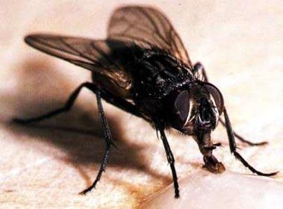 La mosca que sabe contar