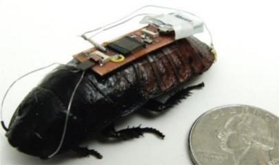 ¡Cucarachas teledirigidas!