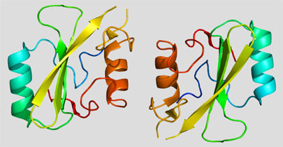 Descubren la proteína 'Hulk'
