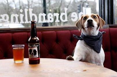 Se vende cerveza para perros