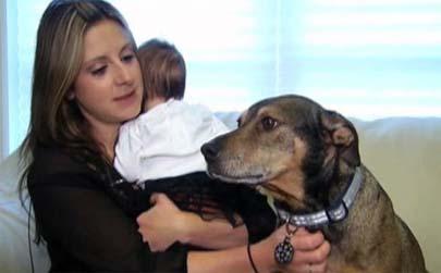 Un perro salva la vida de un bebé