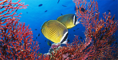 Dos tercios de las especies marinas aún no han sido descubiertas