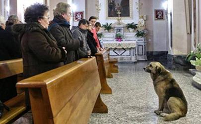 Ciccio, el perro que espera cada día en la Iglesia a su dueña fallecida