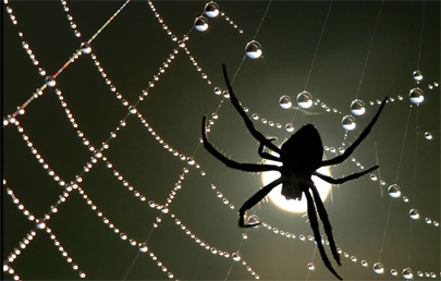 En Sao Antonio da Platina llueven arañas