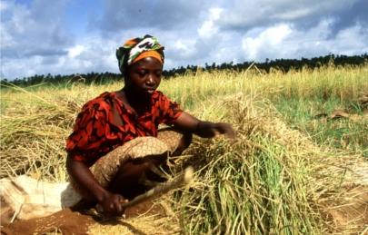 ¿Cómo alimentar a un mundo con hambre?