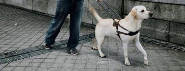 Estudiantes crean un perro lazarillo robótico