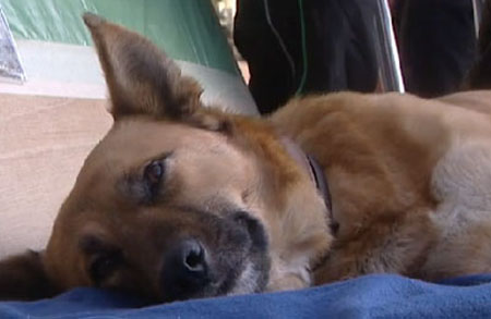 Grupo de niños recoge fondos para operar a perra abandonada