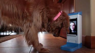 Joven de 14 años crea una app para que las mascotas no se sientan solas