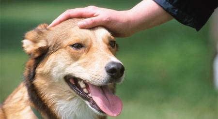 Acariciar a un perro reduce la ansiedad antes de un examen