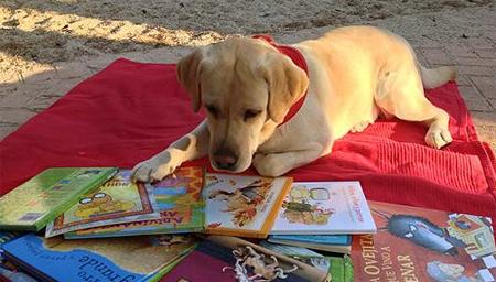 Perros para ayudar a los niños a aprender a leer