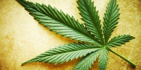 El 63% de los jóvenes, a favor de la legalización de la marihuana