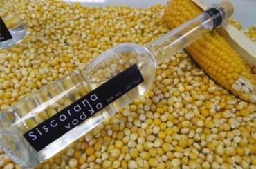 Estudiante crea vodka a partir de maíz para su proyecto de fin de carrera