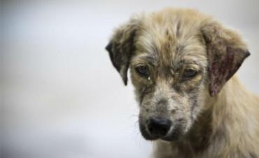 Ésta es la desgraciada vida de un perro callejero en Bombay