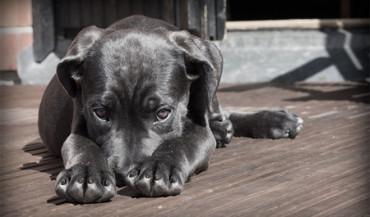 Niño de Móstoles renuncia a sus regalos para ayudar a los animales abandonados