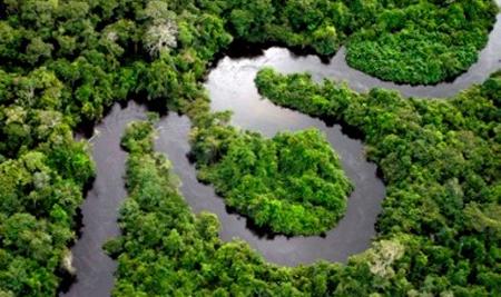La mitad de la selva amazónica habrá desaparecido en 2050