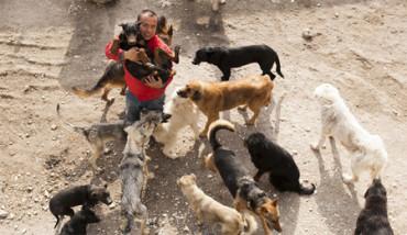 Millonario chino pierde su fortuna tratando de salvar a perros abandonados