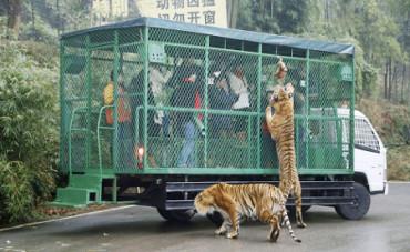 Descubre el zoo en el que los enjaulados son los visitantes