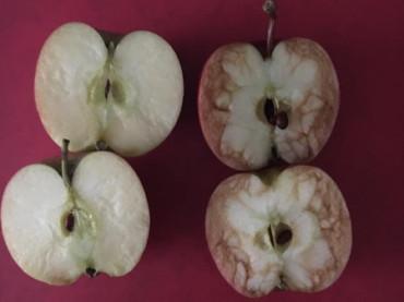 Una maestra muestra a sus alumnos los efectos del bullying con manzanas