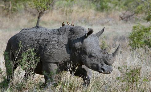 Hay un millón de especies animales y vegetales en riesgo de extinción