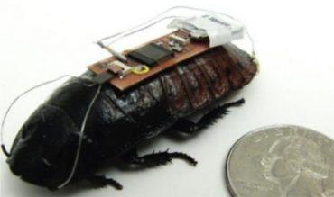 cucarachas-teledirigidas.jpg