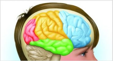 desarrollo-cerebro.jpg