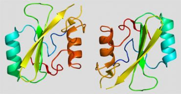 proteina.jpg