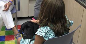 Perros adiestrados servirán de apoyo a menores en procesos judiciales