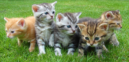 El porqué del éxito de los vídeos de gatos en Internet