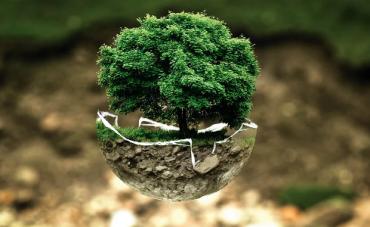 medio-ambiente-PN.png