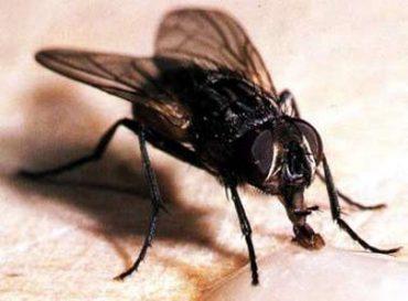 mosca2.jpg