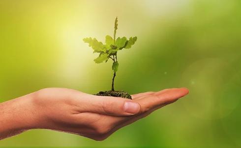 plantar-arbol.png