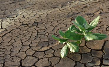 sequía.png